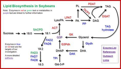 lipid metabolism diagram lipid metabolism