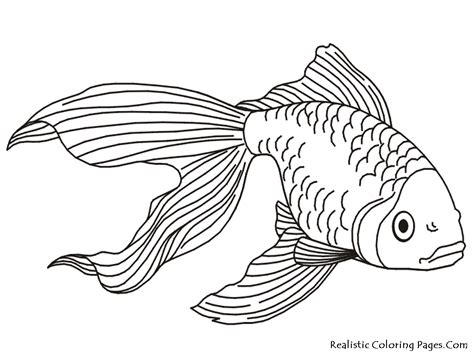 goldfish coloring pages realistic coloring pages