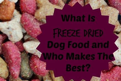 can you freeze dogs what is freeze dried food and who makes the best