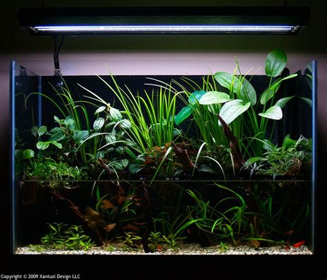 aquascape lighting another great paludarium lighting suspended over the set up looks perfect paludariums