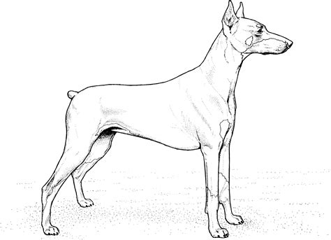 puppy dog coloring pages dog breeds picture