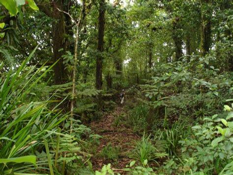 la isla interior isla coco la isla de los dinosaurios est 225 en costa rica