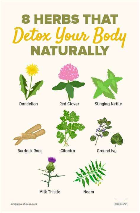 List Of Detoxing Herbs by Detox Your Naturally 8 Herbs That Ll Do The Trick