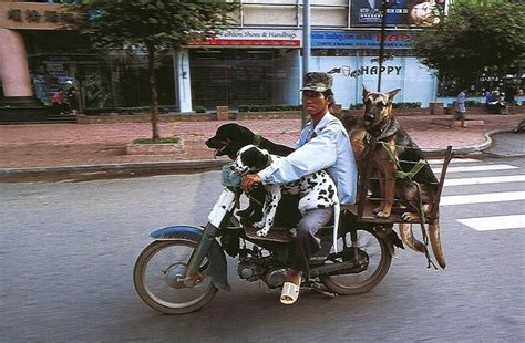 chions of illusion the science behind mind boggling images and mystifying brain puzzles vietnam s motorbikes carry mind boggling loads of stuff