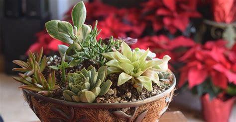 cactus para interior c 243 mo seleccionar suculentas ideales para interiores