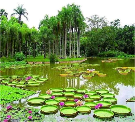 some of the botanical wonders of guyana by dmitri