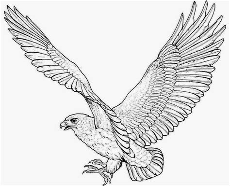 Golden Eagle Coloring Page free coloring pages of golden eagle