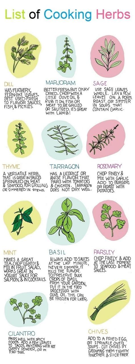 fresh planted herbs gastronomy pinterest list of herbs 28 images plant insect information