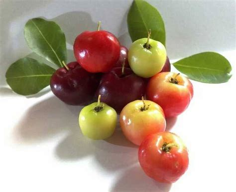 Min 5 Biji Benih Buah Katilayu benih buah buahan fresh nature