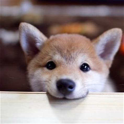 Adorable dogs ohsocutedogs twitter