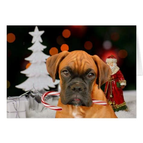 boxer cards boxer greeting card zazzle
