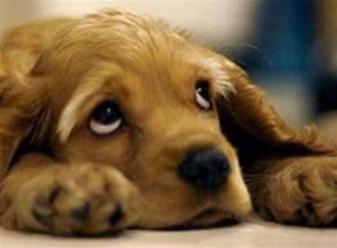 imagenes abstractas de un perro imagenes de perros tiernos imagui