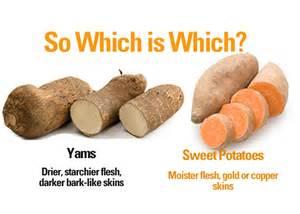 yams and sweet potatoes not the same fyi cynthia