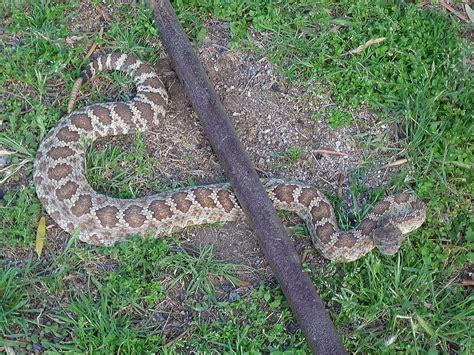 Garden Snake Rattle Ranch Critters