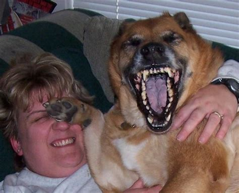 laughing puppy laughing daily picks and flicks