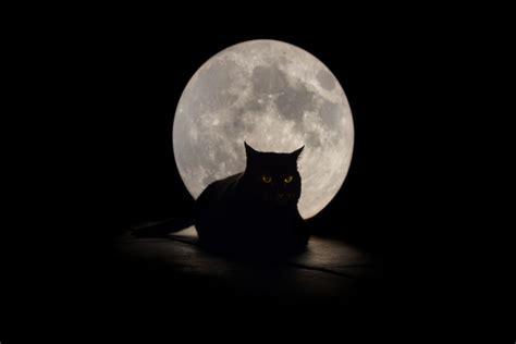 una noche un gato gato negro sentado en una noche de luna llena 77445