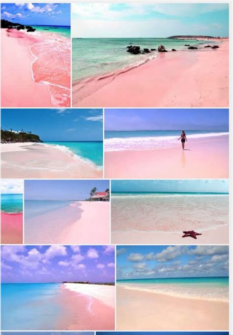 beaches with pink sand 25 best ideas about pink sand bahamas on