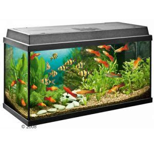 membuat filter aquarium dari kaca langkah membuat dan instalasi filter di aquarium sendiri
