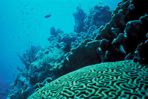 Coral Reef L by Photo Gallery Of Coral Reefs