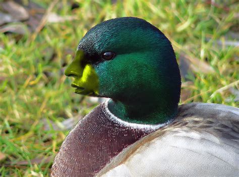 google images ducks ducks with human faces