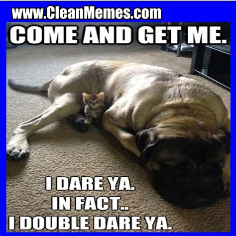 Cat And Dog Memes - cat memes clean memes the best the most online page 27