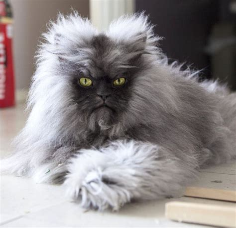 Now Wouldnt You Like To Look Like This At 5 Months by Now This Is A Cat I Wouldn T Mind He Looks Like A Lil