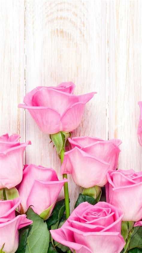 wallpaper pink rose flowers wood background  uhd
