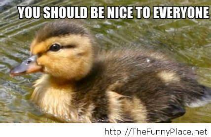 Be Nice Meme - be nice meme thefunnyplace