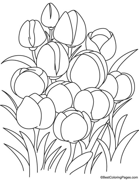 Cp Tulip pin page tulip with honeybee coloring tulips on