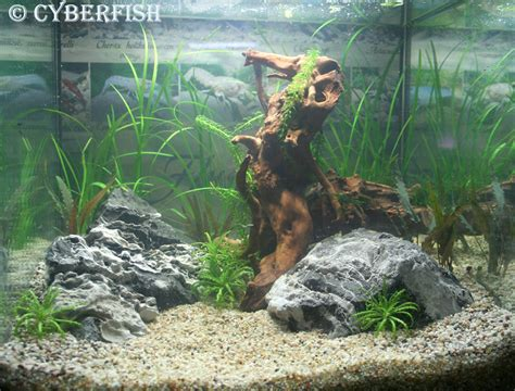 Lu Aquascape mon premier aquascape