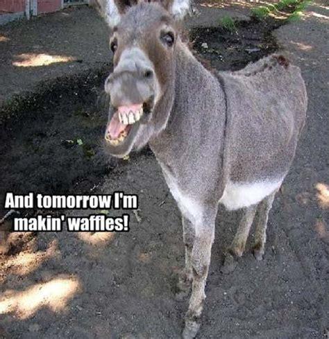 funny donkey ass