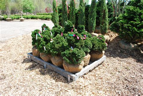 Planters Choice Newtown Ct specialty conifers planters choice