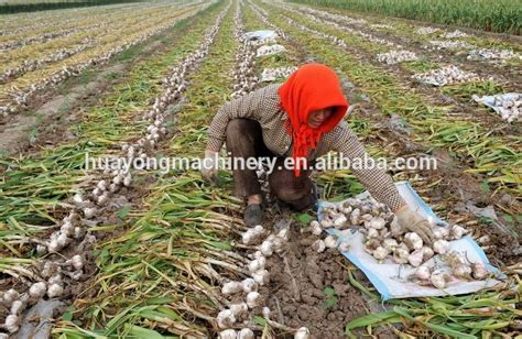 Garlic Planter For Sale by Wholesale Agricultural Farm Machinery Vegetable Garlic Planter For Sale Buy Garlic Planter