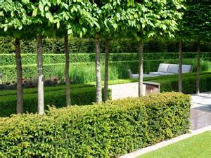 plant a formal hedge hgtv