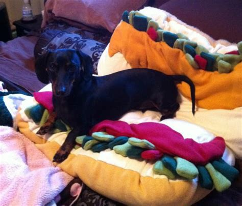 dachshund bed dachshund hot dog bed dog breeds picture