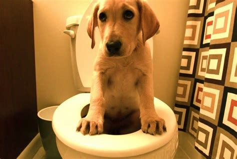 diarrhea in dogs diarrhea in dogs symptoms and remedies