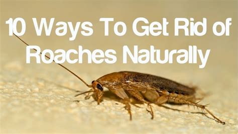 how to get rid of roaches in the bathroom natural insect protection archives cedarcide