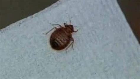 bed bug exterminator detroit detroit ranked no 7 in list of cities with most bed bugs