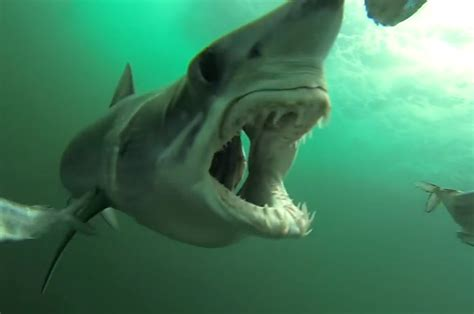 Shark Bait by Gopro Puts You In The Shoes Of Shark Bait