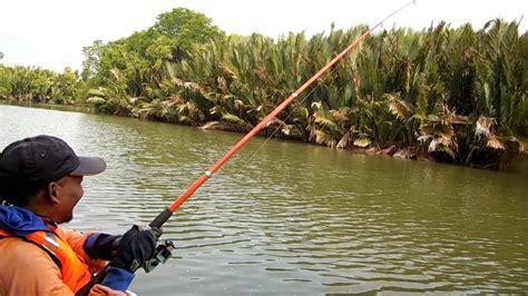 Pelung Untuk Mancing Ikan Baronang memancing ikan muara kakap tompel atau ikan tanda tanda