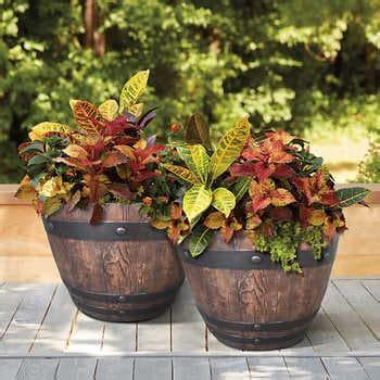 planters plant pots costco