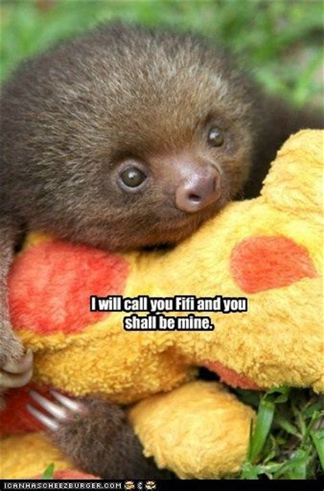 Cute Sloth Meme - memes animal humor and so cute on pinterest
