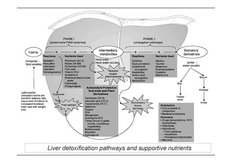 Liver Detox Pathways by Strategies For A Safe Sumptuous Weekend Carpe