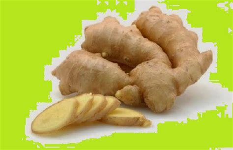 Tanaman Herbal Kunyit Putihkunir Putih jual ekstrak kunyit putih jual kunyit putih bubuk asli