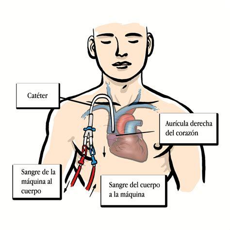 alimentos no recomendados para el acido urico pulpo y el acido urico leer m 225 s 237 culos gu 237 as