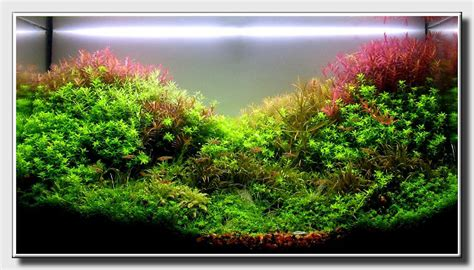 aquascaping world aquascape of the month march 2009 quot patchwork