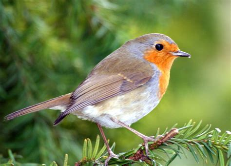 ideas to create a backyard bird sanctuary attracting wild