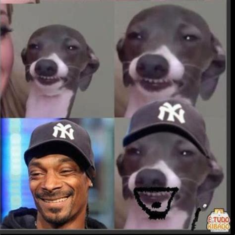 marbles dogs marbles looks like snoop dogg snoop dogg marbles and dogs