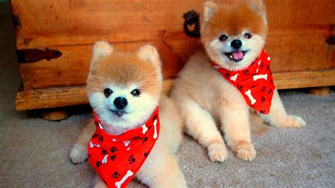cute dogs puppies  youtube