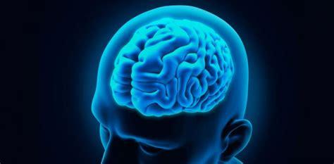 imagenes de el cerebro humano cerebro noticias y art 237 culos